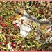 Berrylicious!! by carolmw