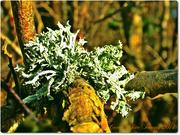 5th Dec 2014 - Lichen