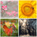 My Fab Four Seasons of 2014 by alophoto