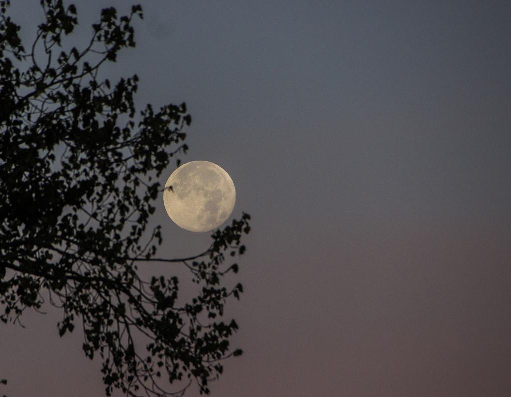 Under the silvery moon by shepherdman