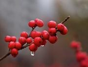 5th Dec 2014 - Berries...