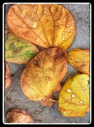 5th Dec 2014 - Autumn Leaves and Drops