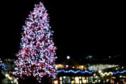 5th Dec 2014 - Bokeh Tree