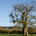 Old tree and tower - 7-12 by barrowlane