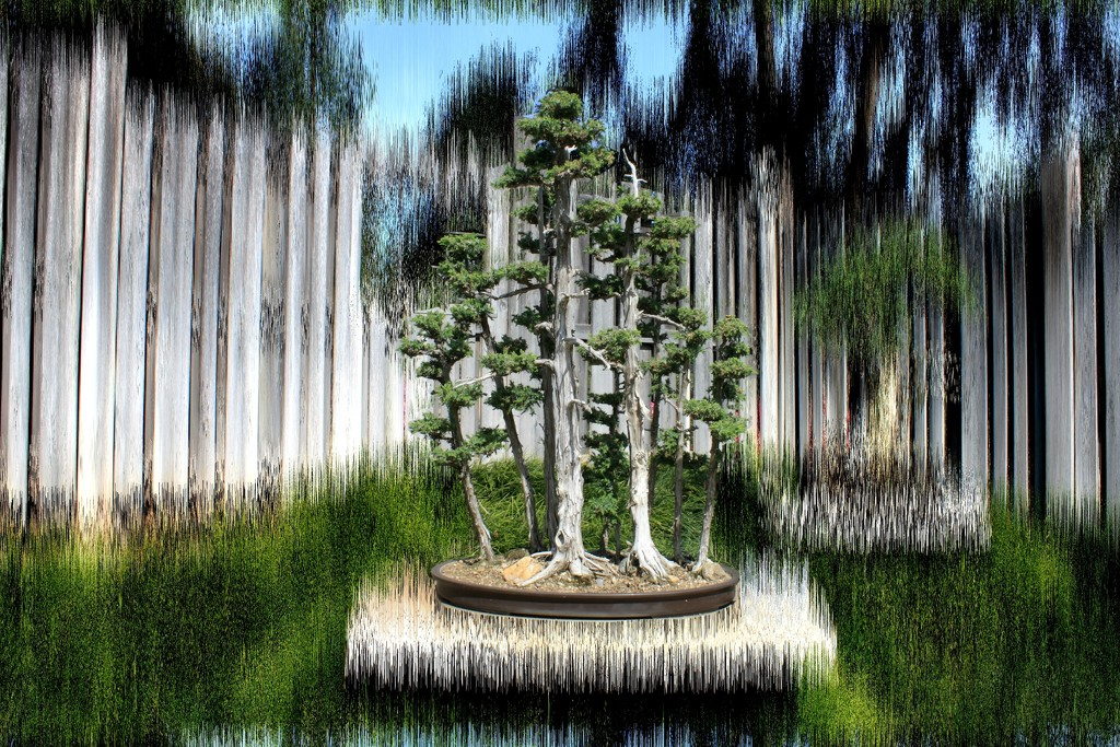 bonsai in vertical by blueberry1222
