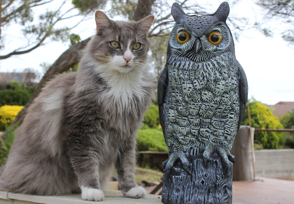 The Owl and the Pussy cat.... by gilbertwood