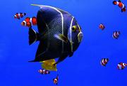 8th Dec 2014 - Something Fishy!