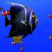 Something Fishy! by fayefaye