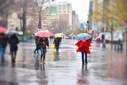 9th Dec 2014 - Rain Rain Go Away