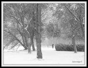 10th Dec 2014 - Snowy Morning