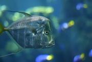 10th Dec 2014 - Fish