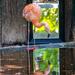 Flamingo  by sugarmuser