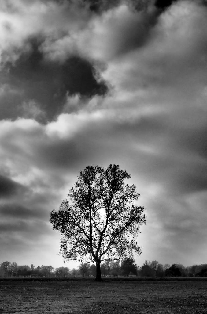 Lone Tree by rosiekerr