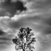 Lone Tree by rosiekerr