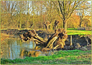 12th Dec 2014 - Tree Trunks
