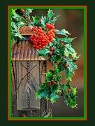 10th Dec 2014 - The Season Approches