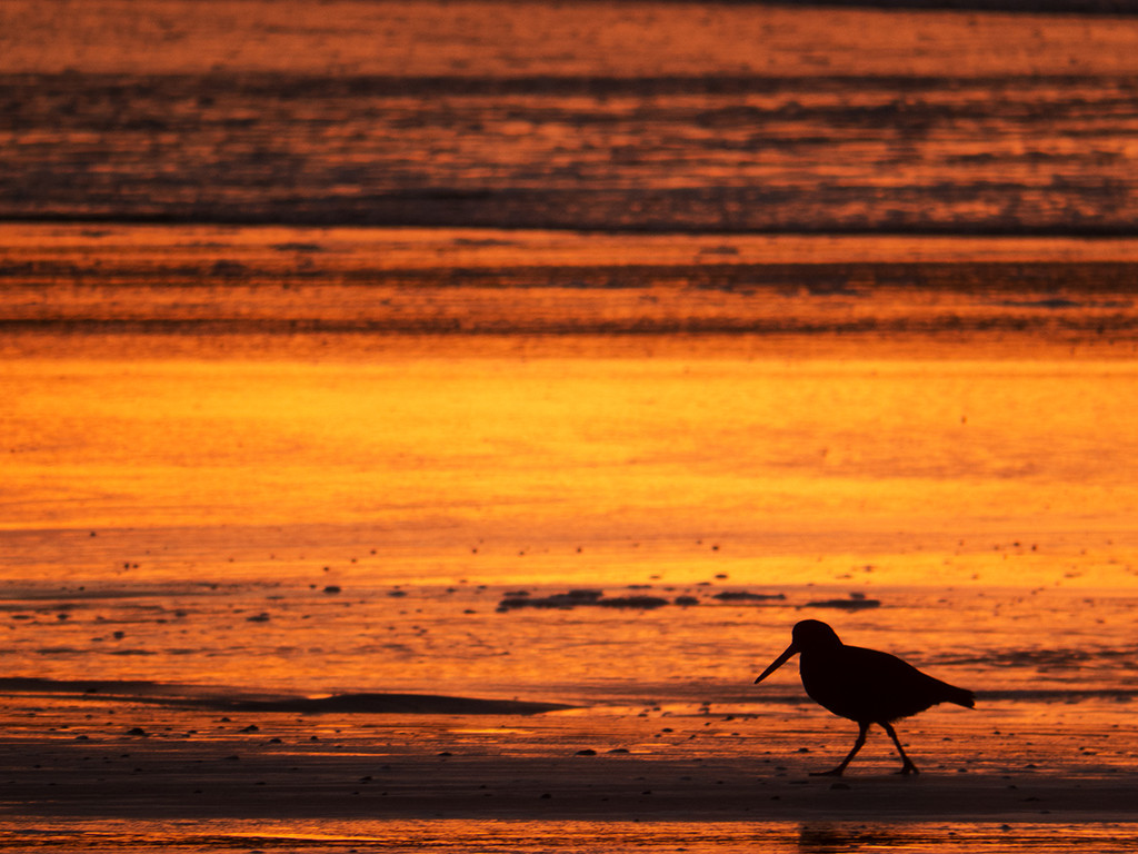 striding at sunset by kali66