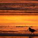 striding at sunset
