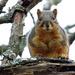 Squirrel Training 101 by milaniet