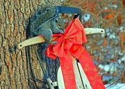 13th Dec 2014 - Working for Nuts