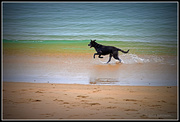 14th Dec 2014 - Jackie the Swimming with Dolphin Dog...