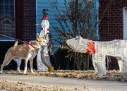 14th Dec 2014 - Foxy Meet Polar Bear