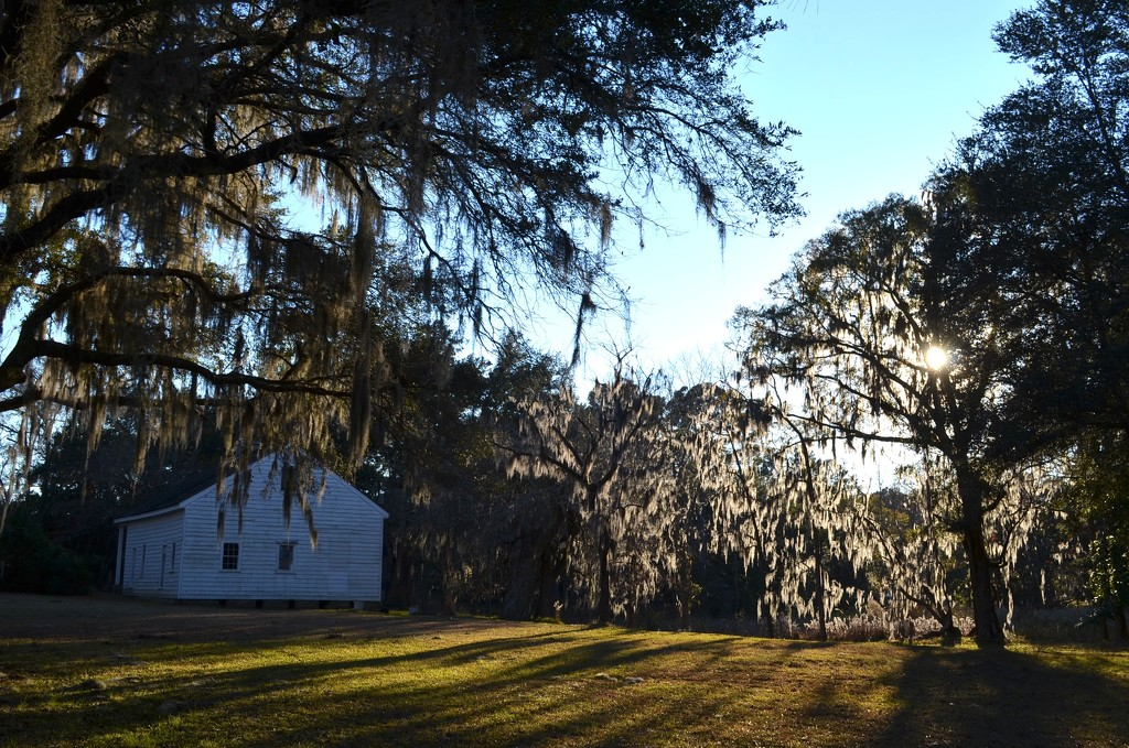 Late afternoon light and shadows by congaree