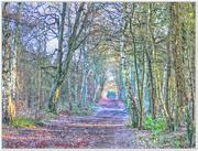 15th Dec 2014 - Woodland Path