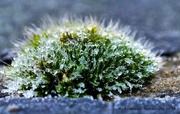 13th Dec 2014 - Afternoon Frost