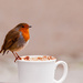 15th December 2014 - Mine's a Cappuccino on 365 Project