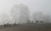 15th Dec 2014 - Misty morning