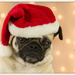 Christmas Pug by lyndemc