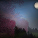 Cherryblossom Moon by teiko