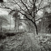 The trees stand bare and gaunt... by vignouse