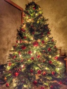 17th Dec 2014 - Oh Christmas Tree, Oh Christmas Tree......