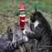 Good kitties don't eat elves.  Right? by cjwhite