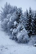 17th Dec 2014 - Winter wonderland