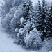 Winter wonderland by elisasaeter