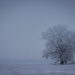 frosty fog by aecasey
