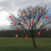 Holiday 19 - My tree in December