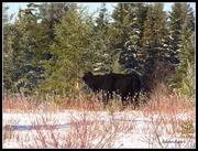 19th Dec 2014 - Can't Bear it!