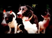26th Oct 2010 - The Hounds Of Hell?