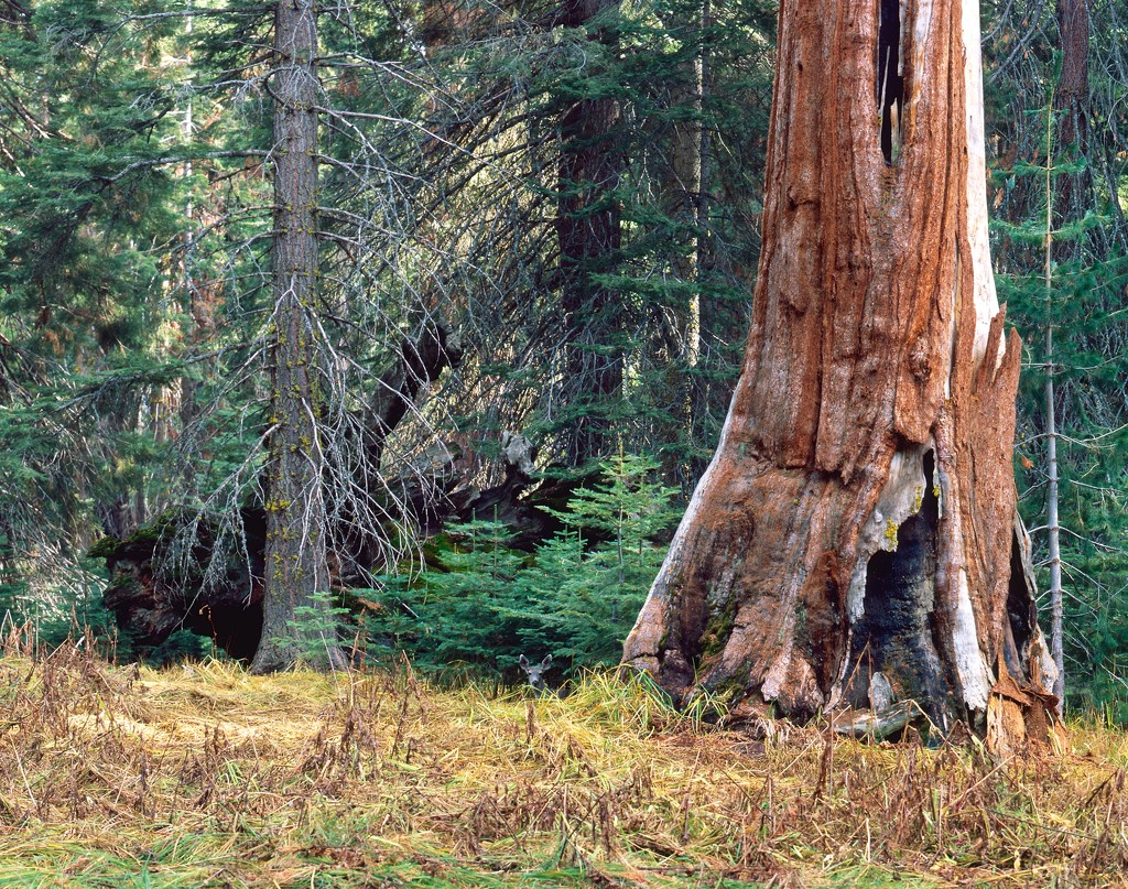 Deer in the woods by peterdegraaff