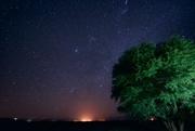 16th Dec 2014 - Lone Tree at Night