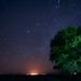 Lone Tree at Night by taffy