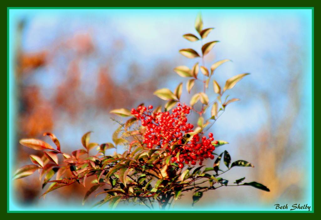 Seasonal Berries by vernabeth
