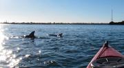 20th Dec 2014 - Dolphin starburst