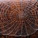 Huge Spider Web by milaniet