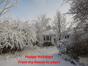 21st Dec 2014 - My Backyard