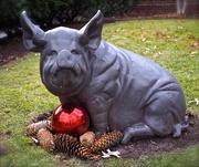 21st Dec 2014 - Holiday Swine